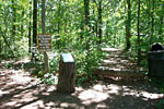Lakeshore Forest Wilderness Trail
